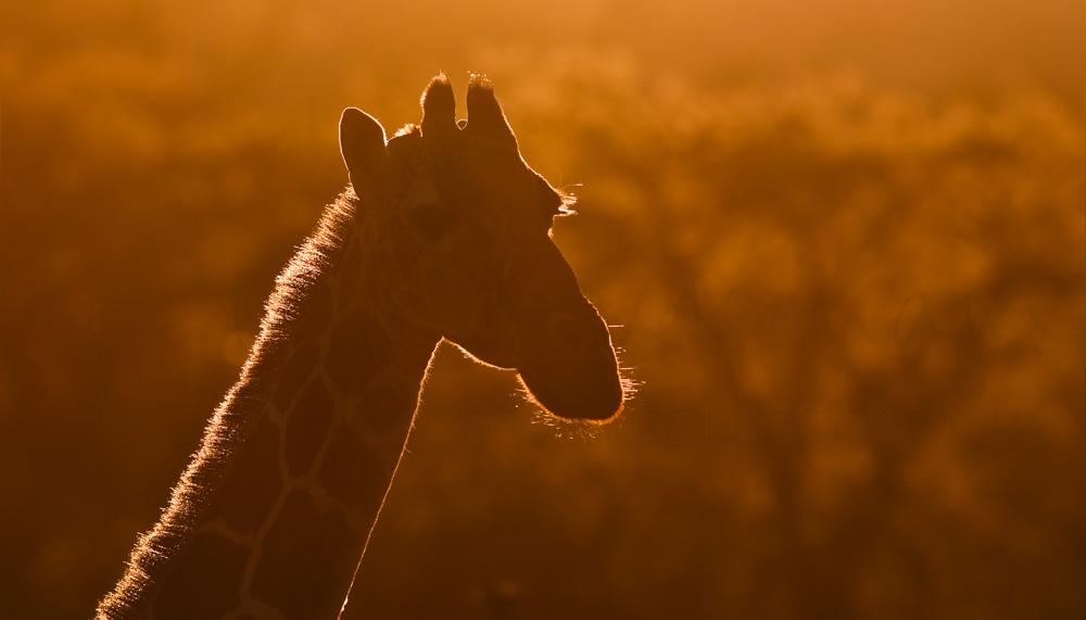 Foto's van Afrikaanse zoogdieren door Ingrid Vekemans