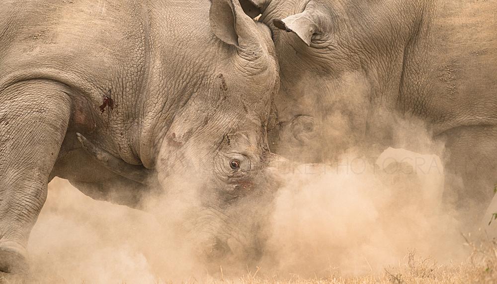 Foto's van nijlpaarden, neushoorns en buffels door Ingrid Vekemans