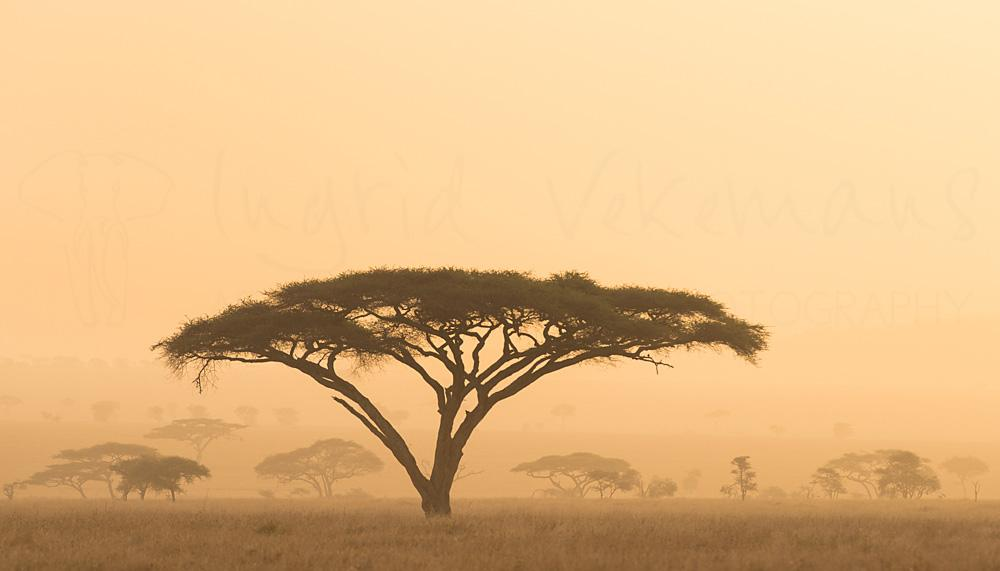 Photography tours to Tanzania with Ingrid Vekemans