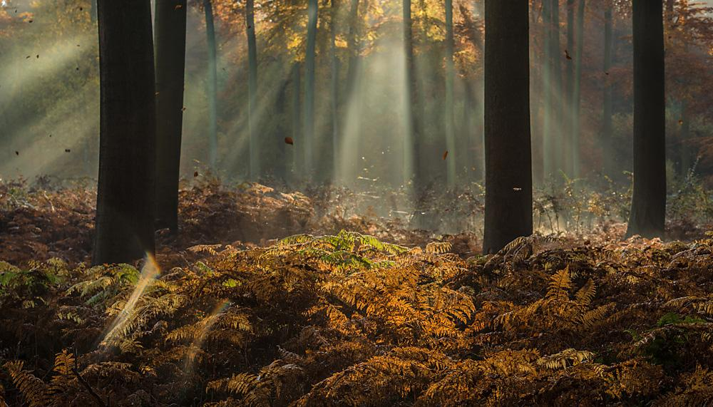 Photos with atmosphere in the woods by Ingrid Vekemans