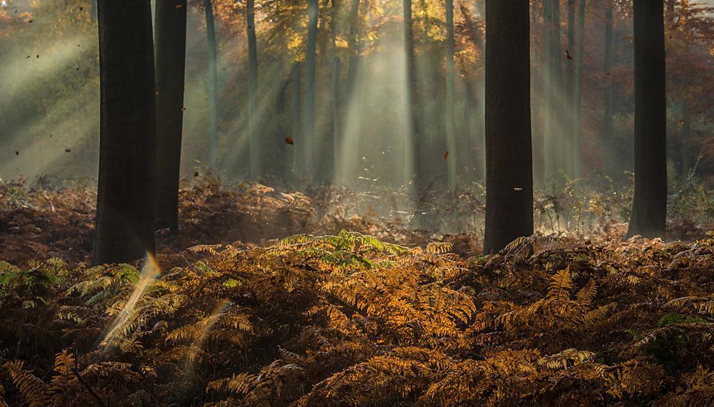 Sfeervolle bosfotografie door Ingrid Vekemans
