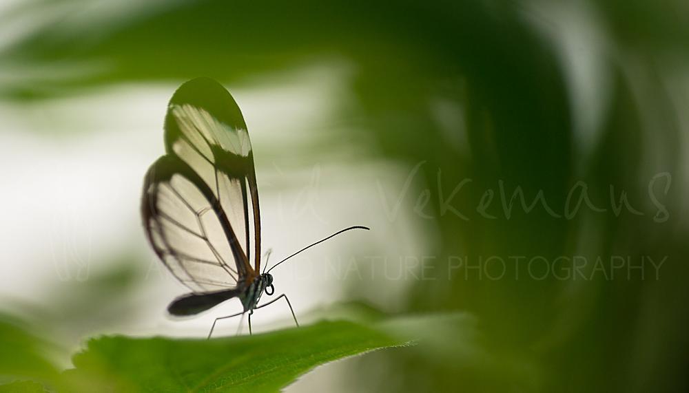 Macrofoto's van insecten en spinnen van Ingrid Vekemans