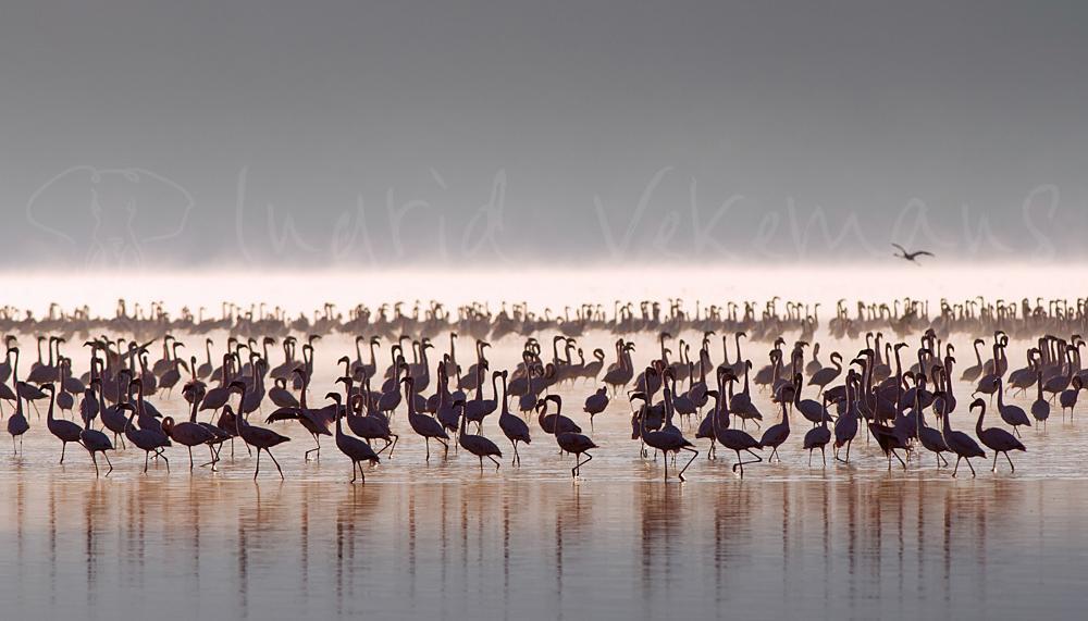 Foto's van Afrikaanse vogels en reptielen van Ingrid Vekemans