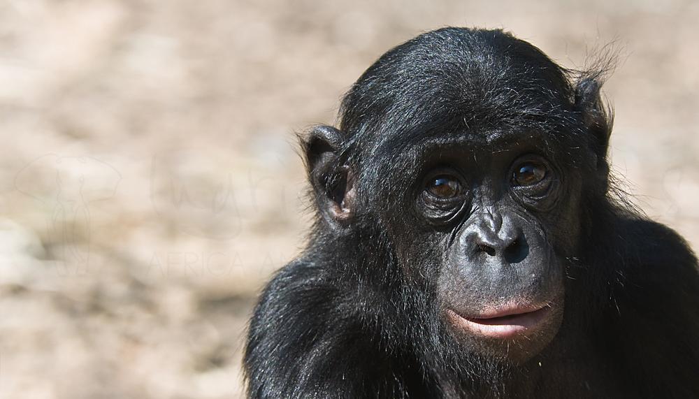 Foto's van dieren in gevangenschap door Ingrid Vekemans