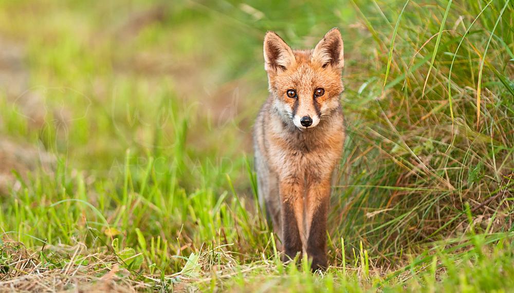 Foto's van Europese wilde dieren door Ingrid Vekemans