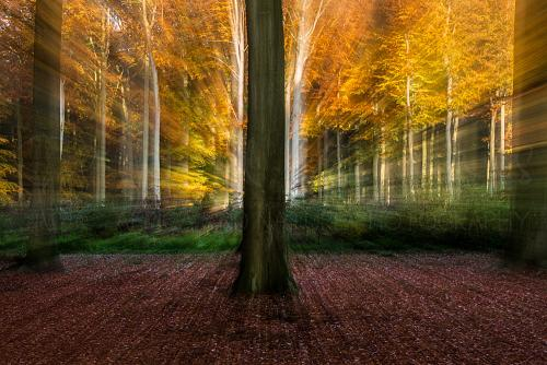 Zoomburst in autumn forest
