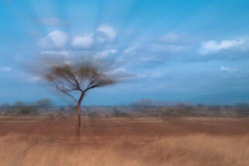 Beste fotoreizen naar Afrika en Kenia met www.ingridvekemans.com, zoomburst van landschap