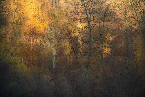 Autumnal golden forest scene with beech trees and a birch tree partly sunlit partly in the shade
