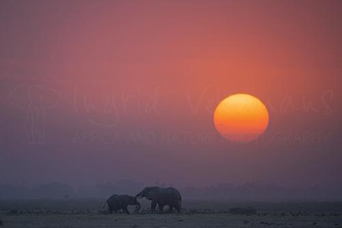 Olifanten bij zonsondergang in Amboseli tijdens 'Over Maneaters en Rode Olifanten' fotosafari