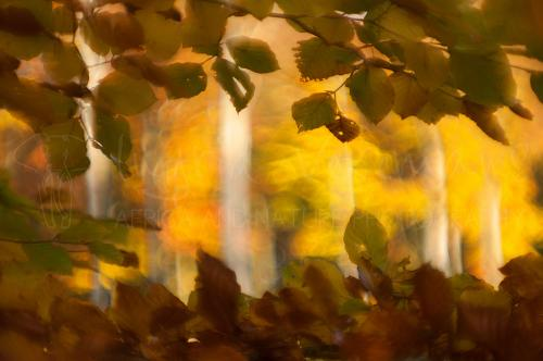 Herfstdetail in het bos