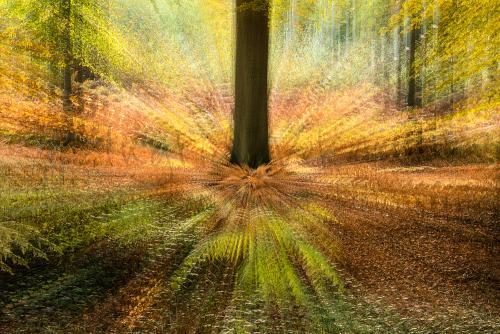 Zoomburst in het bos