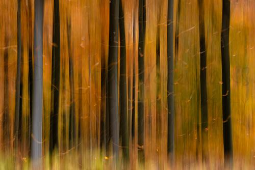 Autumn woods motion effect with falling leaves