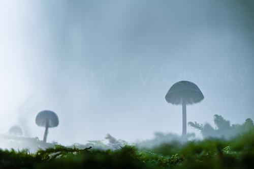 Mushrooms and moss before sunrise close-up macro