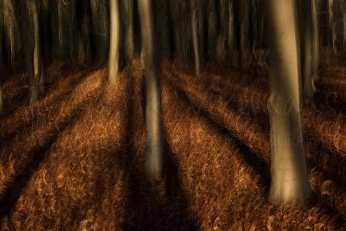 Schaduwspel en bewegingseffect in het bos