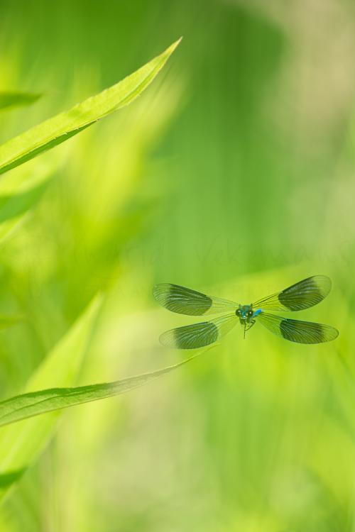 Workshops natuurfotografie en macrofotografie met www.ingridvekemans.com