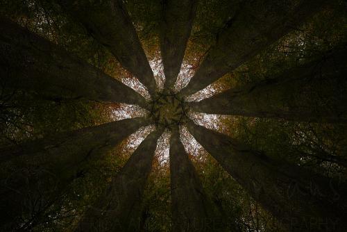 Negen donkere boomstammen rijken in een gelijkmatig ritme naar een stervormige boomkruin