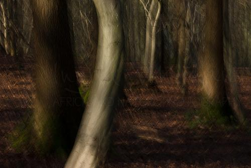 Winter woods with long exposure and motion