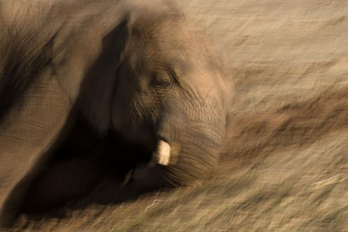 Elephant playing in the sand with motion effect