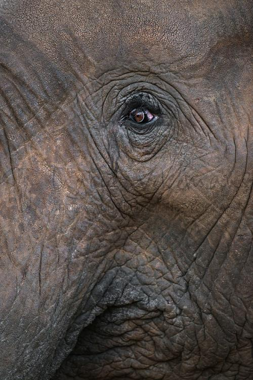 Elephant's eye close-up in Tsavo East during 'Maneaters and Red Elephants' photo safari