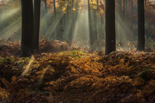 Vallende herfstblaadjes in het bos met zonneharp
