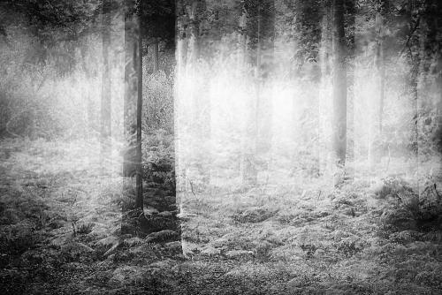 Boomstammen op een bosbodem van varens in zwart wit over elkaar heen geofotografeerd met één dominante boomstam links