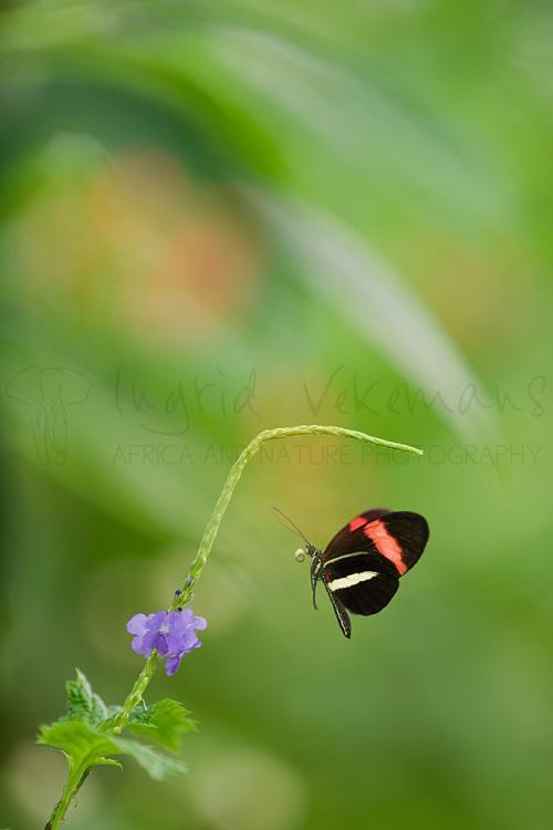 Workshop Wildlife And Butterflies in Blijdorp