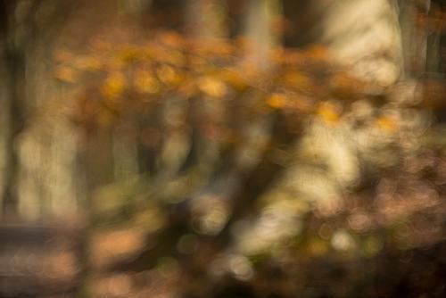 uit focus sfeerbeeld van herfstbos