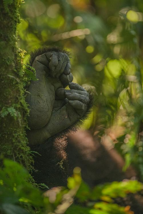 Uganda photo safari with Ingrid Vekemans