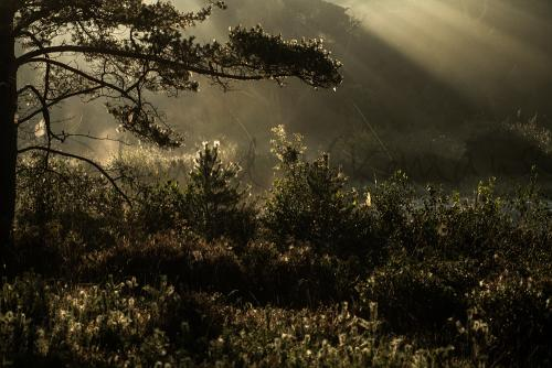 Nature photography workshops and landscape photography workshops with www.ingridvekemans.com