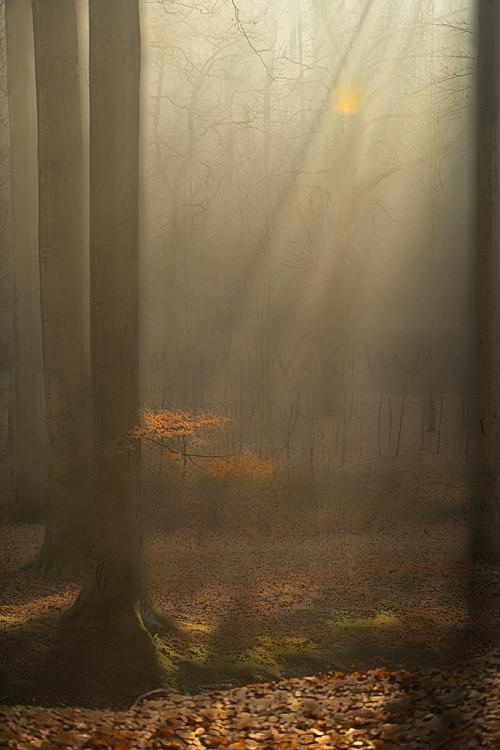 Drie bomen links vangen een zonneharp van rechts die een tak met oranje herfstblaadjes aan een boom verlicht