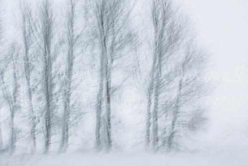 Bomen in de sneeuw met bewegingseffect