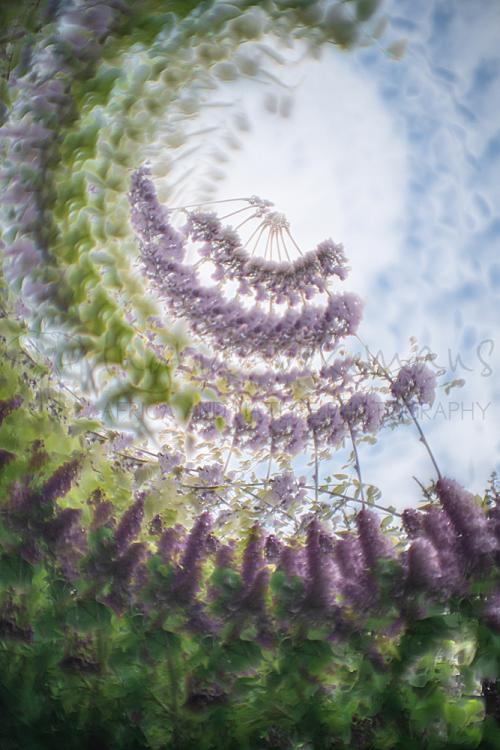 Workshops natuurfotografie en meervoudige belichting met www.ingridvekemans.com