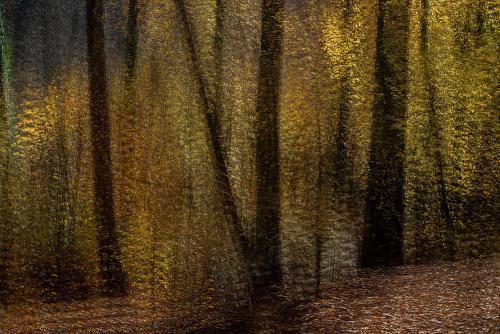 Donkere boomstammen met herfstblaadjes in een schokkende beweging