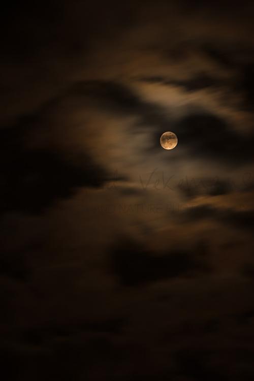Volle maan met maanlicht en bewegende wolken
