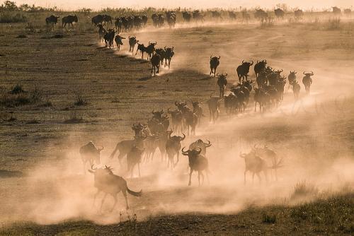 Fotoreizen met Ingrid Vekemans naar de Masai Mara Kenia