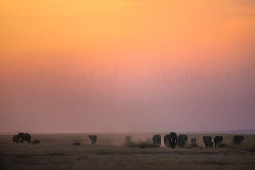 Elephants at sunset in Amboseli during Maneaters and Red Elephants photo safari
