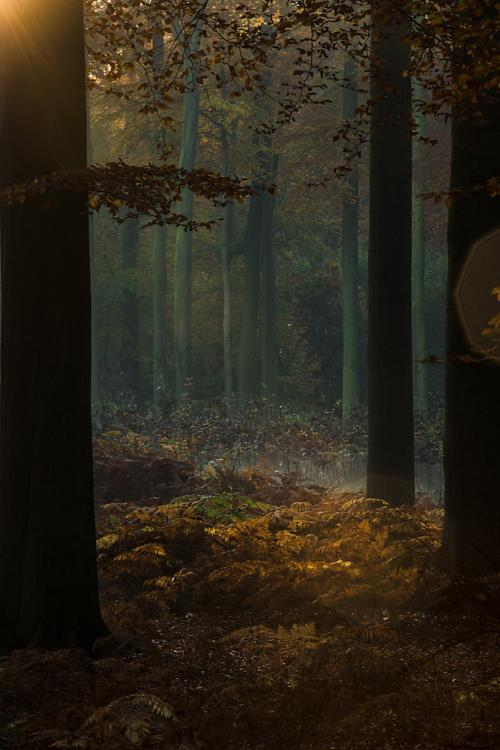 Sfeervol ochtendlicht in herfstbos