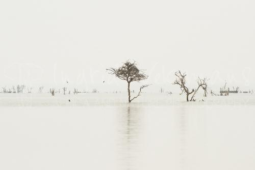 Grijze ochtend op Lake Naivaisha tijdens 'Migratie en Meren van de Grote Rift' fotosafari