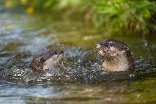 Workshop wildlife photography