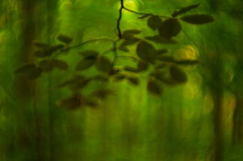 Painterly image of forest