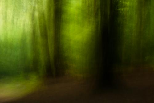 Painterly motion effect in the woods