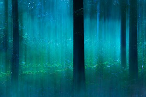 Trees in blue tones with motion effect in the Sonian Forest
