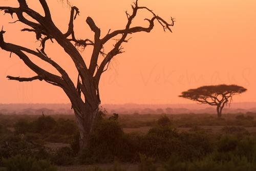 Sunrise in Amboseli during Maneaters and Red Elephants photo safari