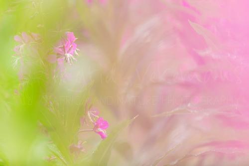 Workshop natuurfotografie en macrofotografie met www.ingridvekemans.com
