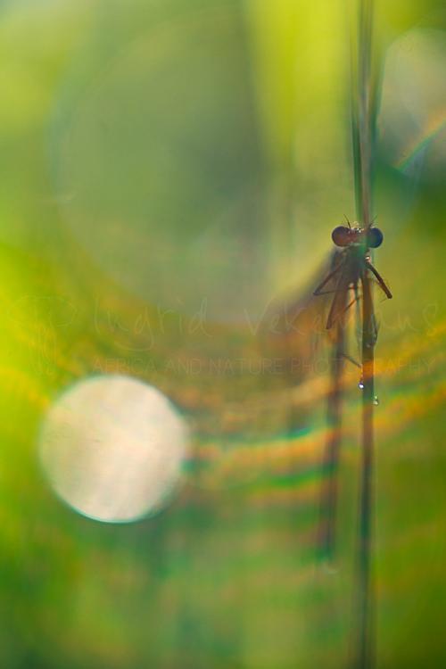 Workshop natuurfotografie en macrofotografie met www. ingridvekemans.com