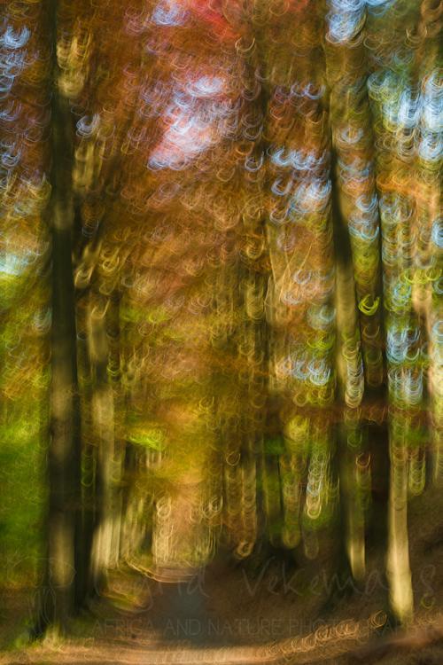Bewegingseffect op bospad