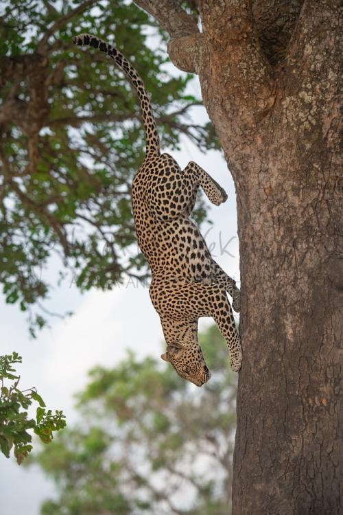 Best photo tours to Tanzania and Africa with www.ingridvekemans.com