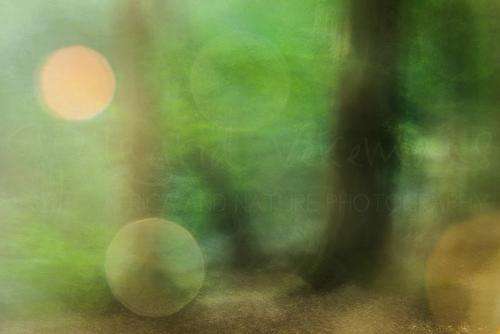 Beweging in het bos met lensflare