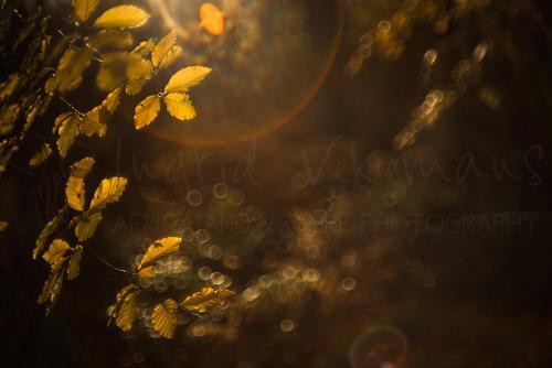 Zon in herfstbos