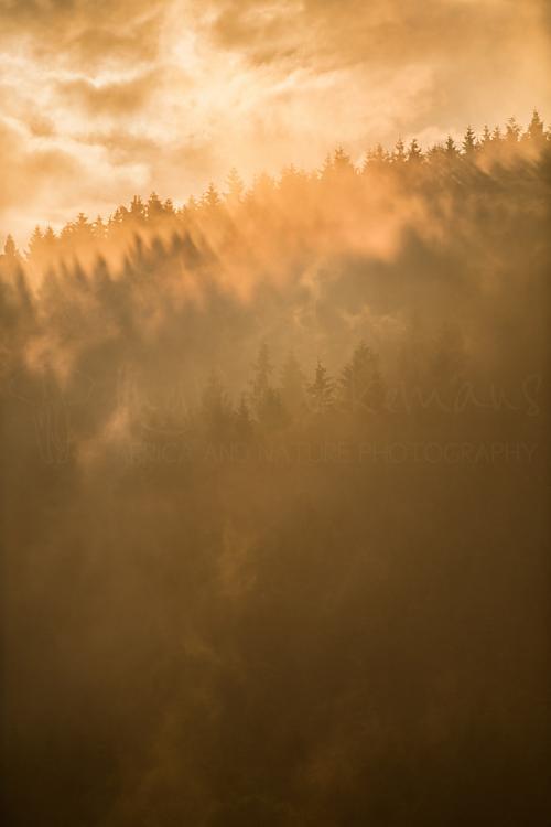 Bos en mist bij zonsondergang